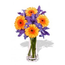 Gerbera and Iris Bouquet